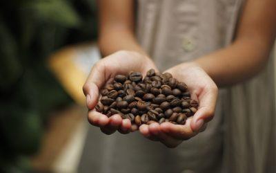 Kávový olej a jeho zázračné účinky na pleť!